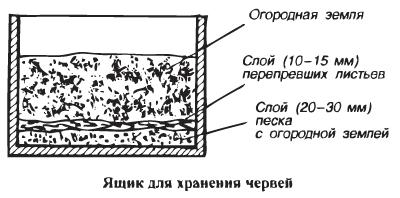 Как хранить червей в домашних условиях