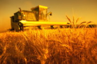 Бизнес фермерство какое более выголно