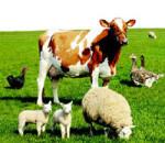 идеи для сельского бизнеса