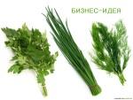 Изображение - Выращивание укропа и петрушки как бизнес vyrashhivanie-ukropa-i-petrushkii