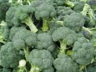 Изображение - Бизнес на выращивании капусты брокколи brokkoli-