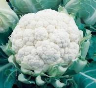 Изображение - Как вырастить цветную капусту на продажу vyirashhivanie-tsvetnoy-kapustyi